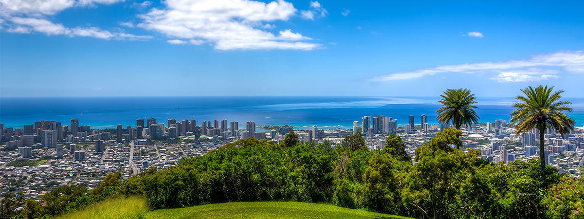 Green Living Blog - Palm Trees Honolulu