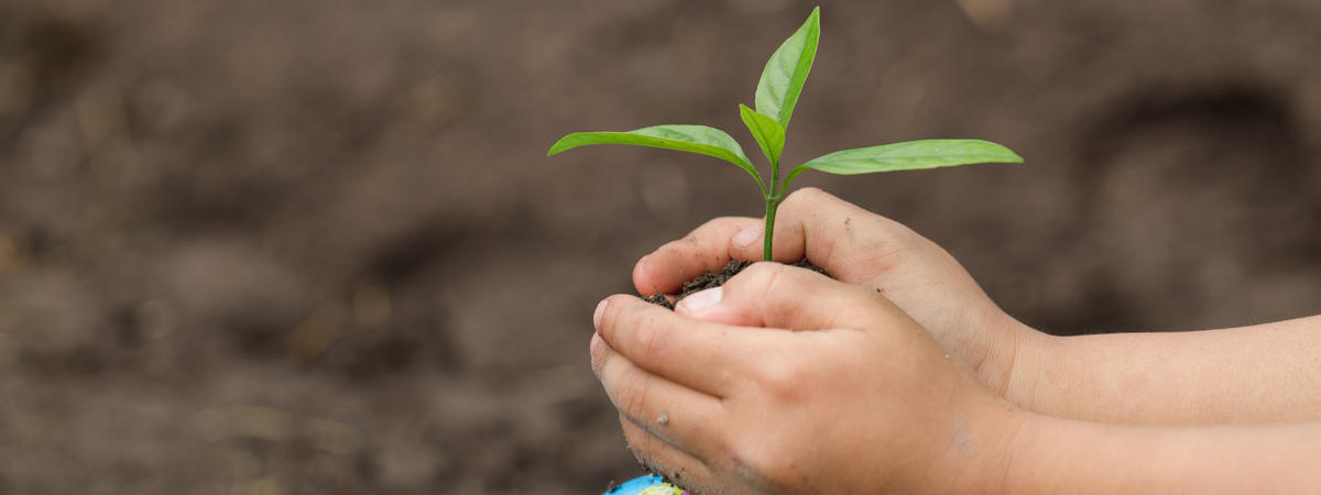 child hand holding a small seedling on the globe, plant a tree, reduce global warming, World Environment Day